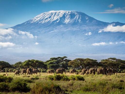 Kilimanjaro Preserves Coral Reef