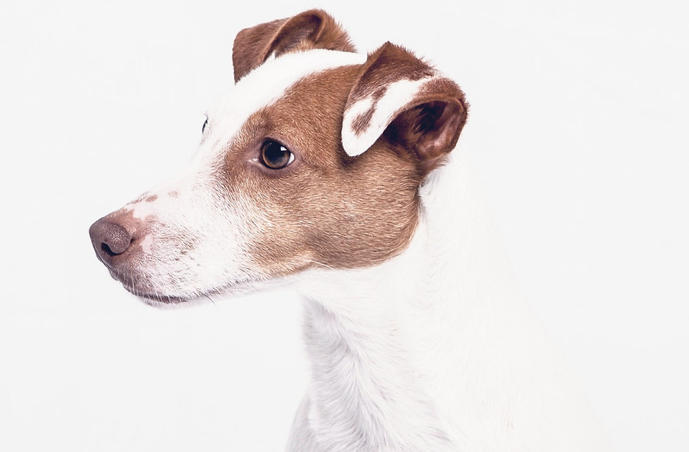Dog's%2520Portrait%2520%2520_edited_edited.jpg
