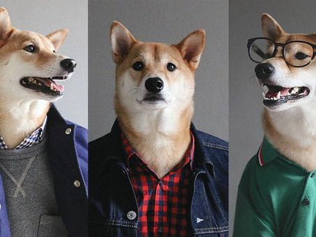 Un chien ultra stylé