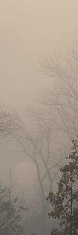 Sun in Fog Vertical II