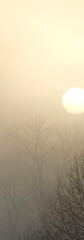 Sun in Fog Vertical I