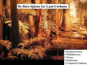 lezing Han steur over flora in het laat carboon, 2021