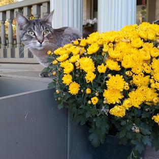 Cal Kitty