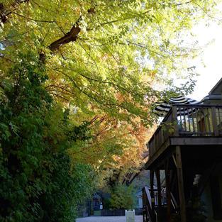 driveway-hidaway_fall.jpg