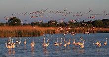 Национальный-парк-Камарг.jpg