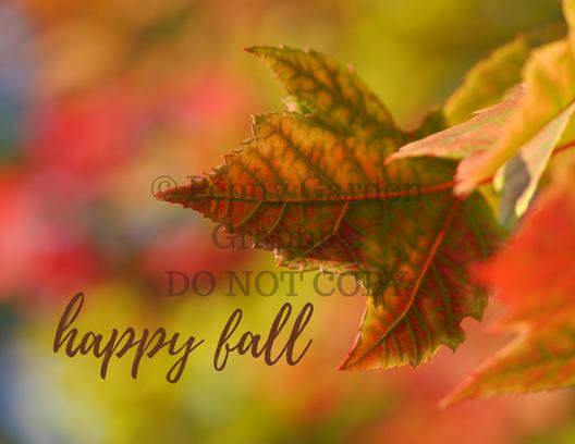 Fall Postcard PDF Downloads