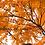 Thumbnail: Fall Postcard PDF Downloads