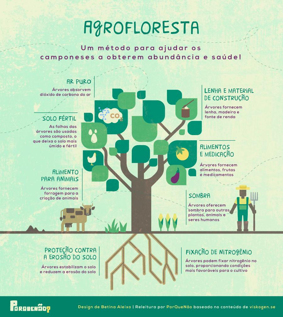 PQÑ---Infográfico_Agrofloresta.png