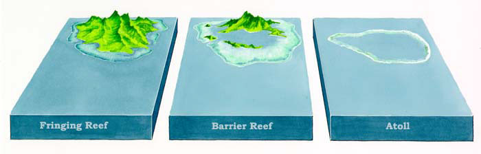 Types of Reefs