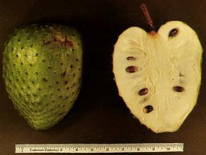 Funny Sounding Fruit is Anti-inflammatory