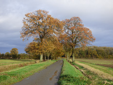 The last days of autumn at Thorpe Abbotts 2020