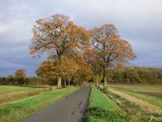 The last days of autumn at Thorpe Abbotts 2020