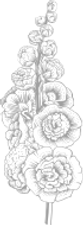 flowers_transparent.png