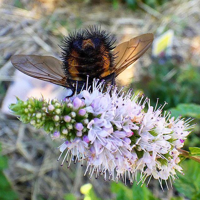 Invite Nature Home! Bee! KBGB