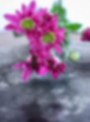 IMG-4816.jpg