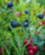 berrise_edited.jpg