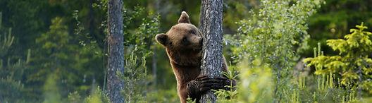 Brown-bear1-2048x1365_edited.jpg