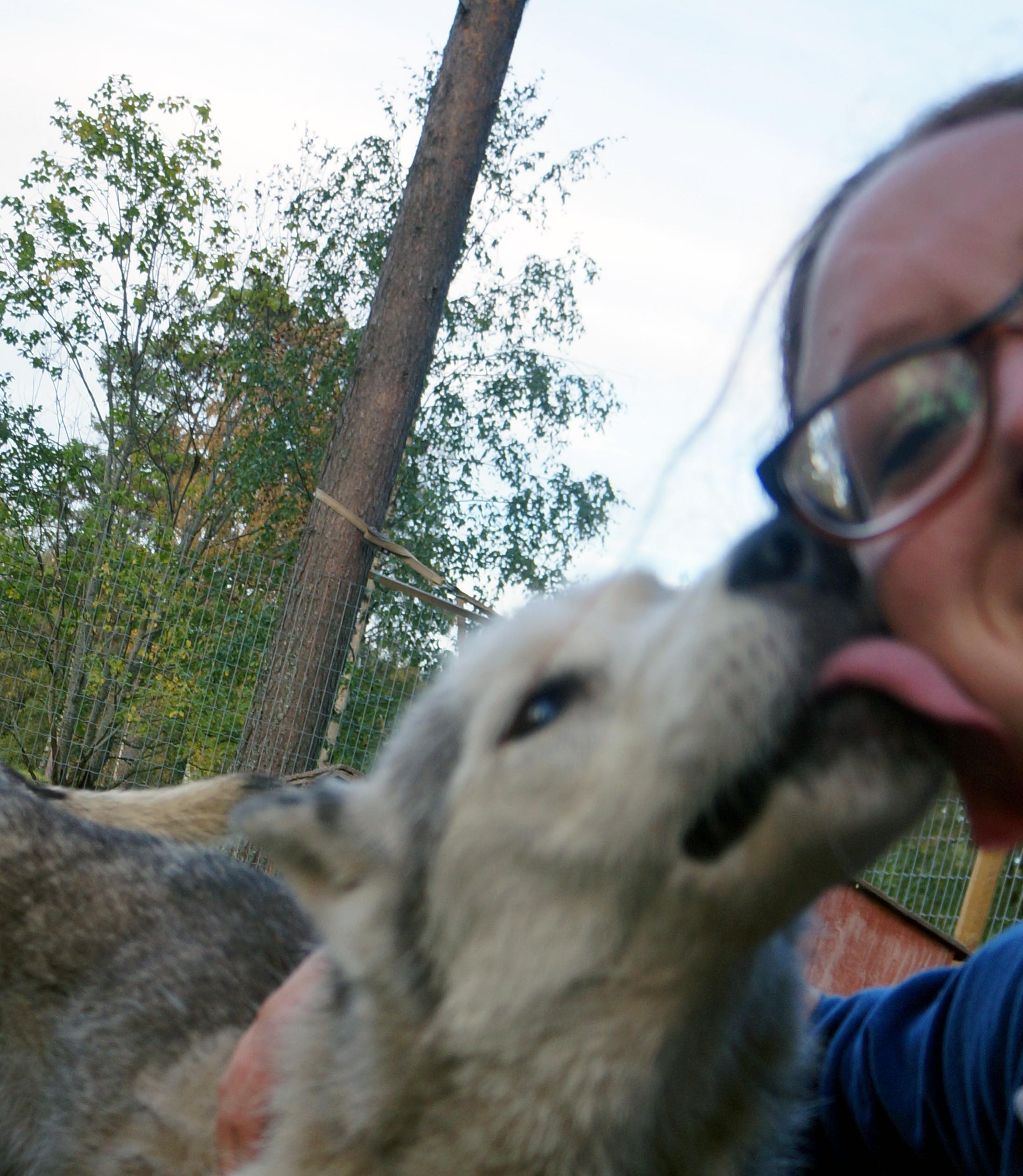 A day on our Siberian husky farm