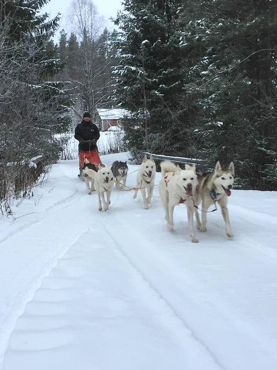 3 days Musher course