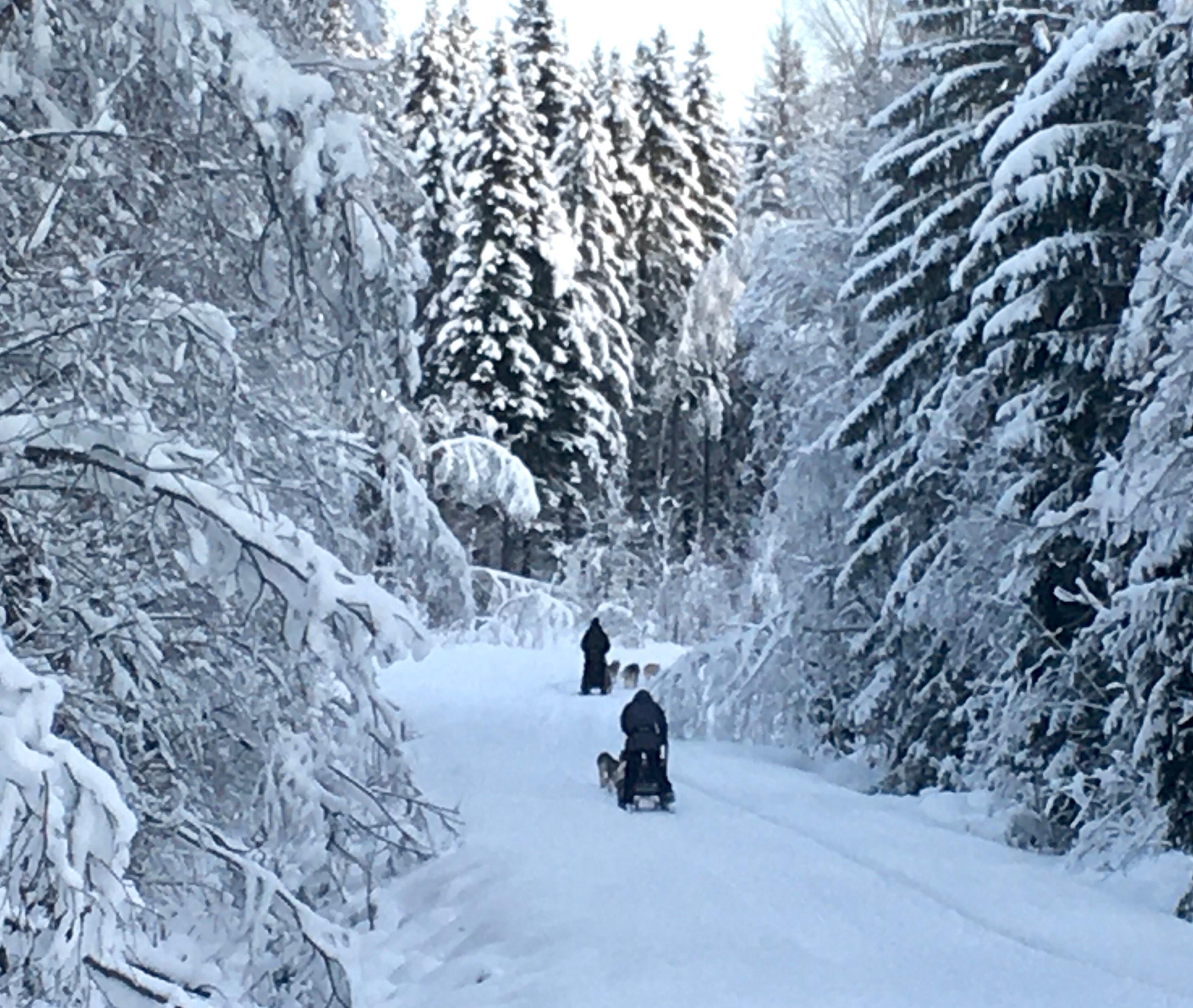 One week Arctic Experience exclusive