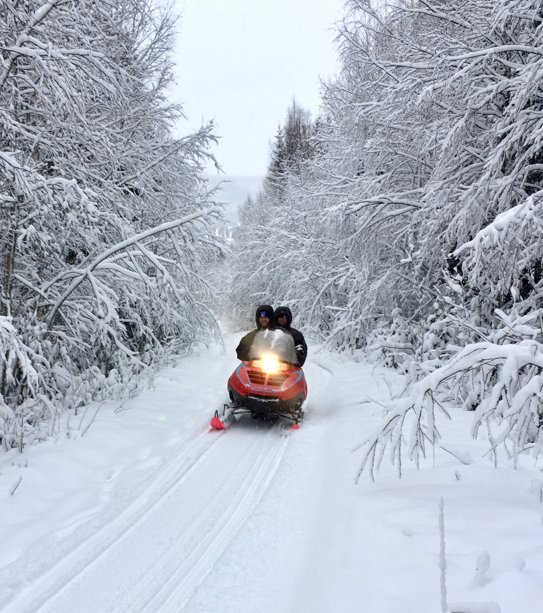 Explore the nature on a snowmobile