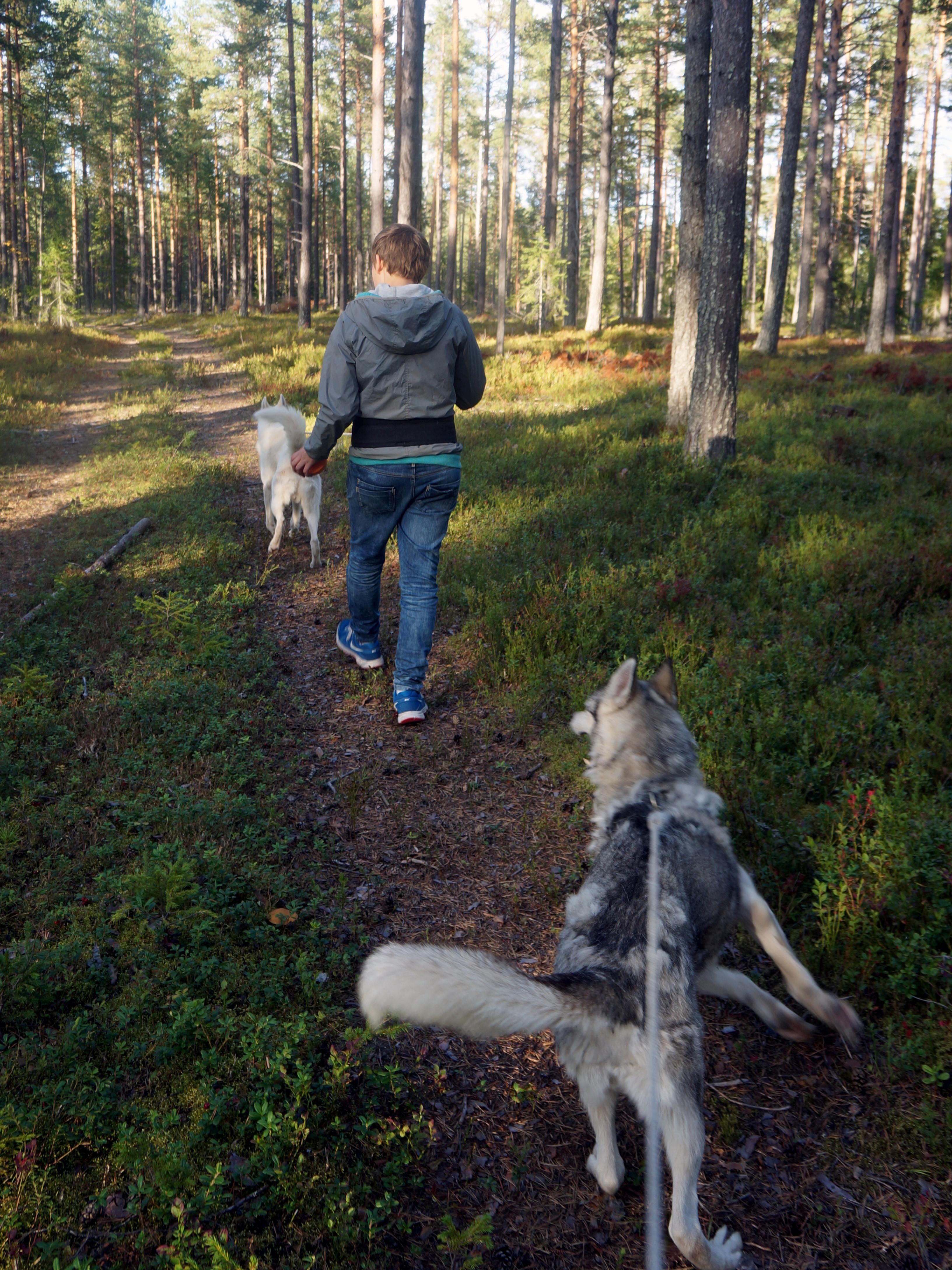 Hiking with a Siberian husky