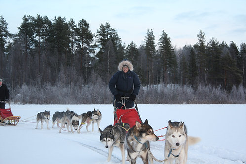 GIFT CARD:  Daytour with a dogsled for one person