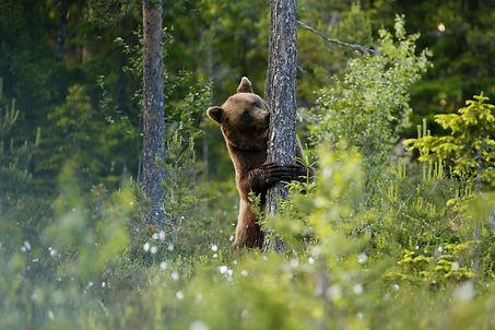 Brown-bear1-2048x1365.jpg