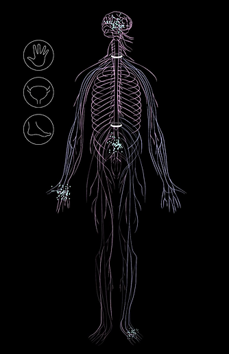 Neural Body.png