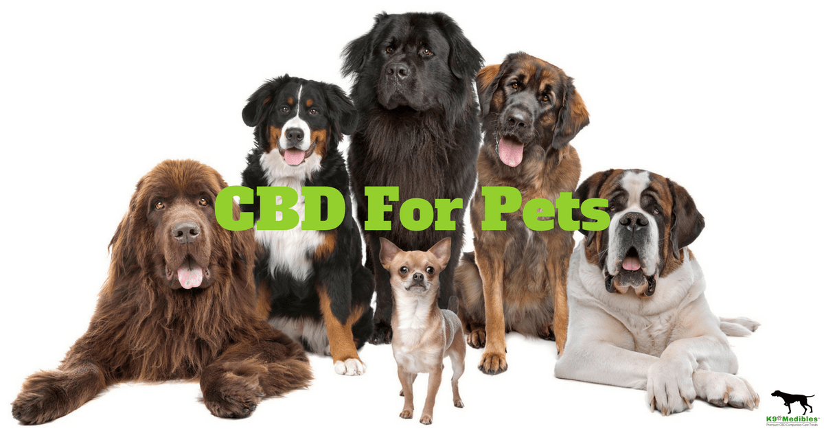 CBD dog picture
