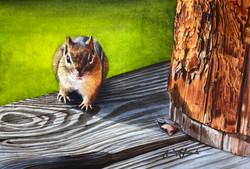 Got Nuts_