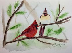 Northern Cardinal Couple 1