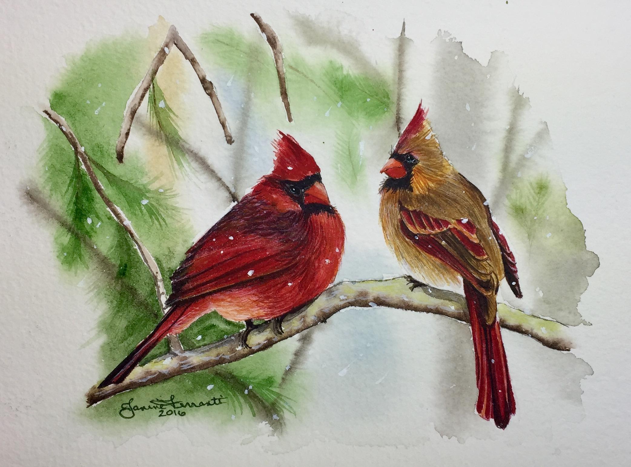 Northern Cardinal Couple 2