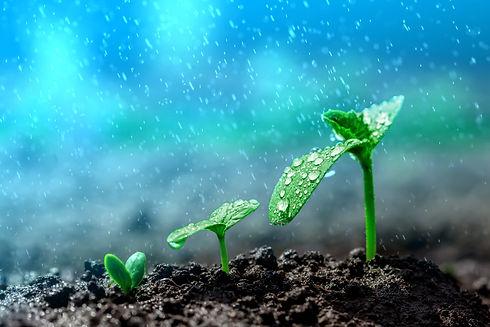 Seed growing 2.jpg