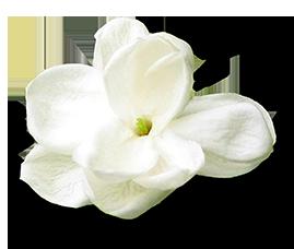 JasmineFINAL.png