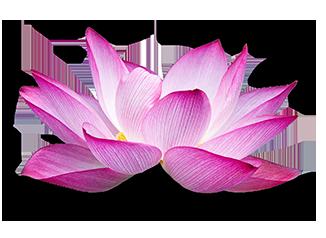 LotusFINAL.png