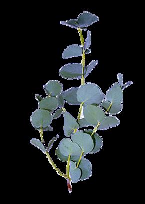 EucalyptusFINAL.png