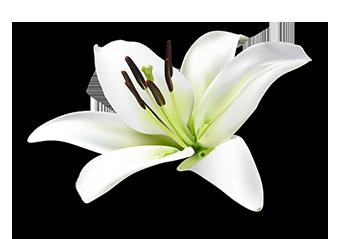 LilyFINAL.png