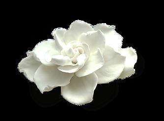 GardeniaFINAL.png