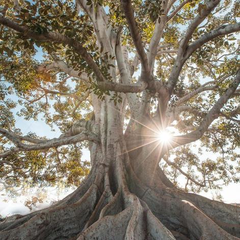 Exercício Árvore da Vida