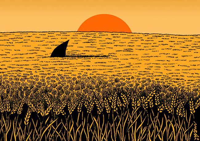 ajkula u pšeničnom polju