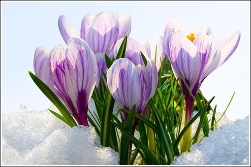 proleće i ljubičice