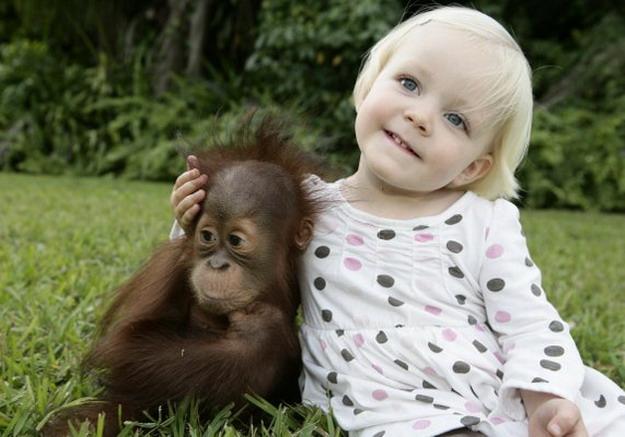 beba i beba orangutan