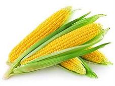 kukuruz i celijakija