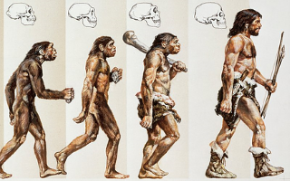 evolucija coveka