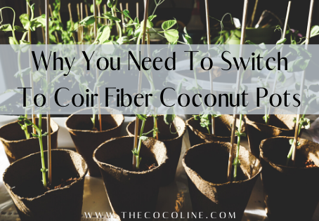 Why You Need To Switch To Coir Fiber Coconut Pots