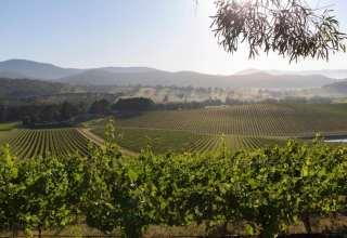 Australian-vineyard-1440x823-320x220