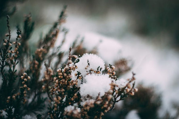 hiver-fin-768x512.jpeg