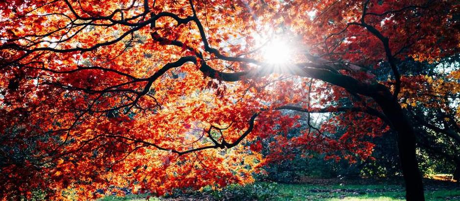 Autumn Equinox Blessings