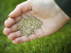 seeding.jpeg